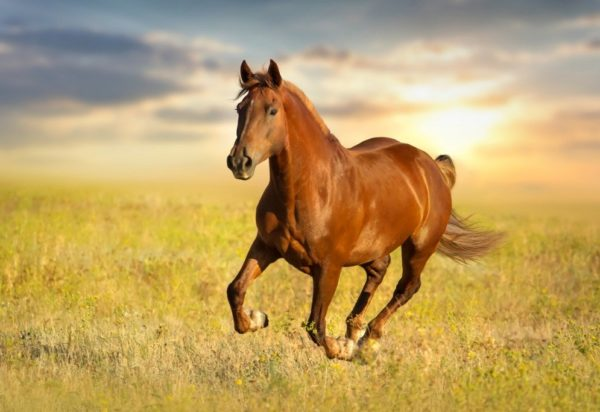 horse feeds Best Horse Feed in India