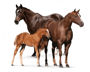 Top Horse Feeds at Best Price in India