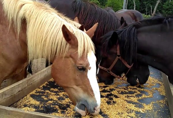 horse feed/horse feed manufacturers in Coimbatore